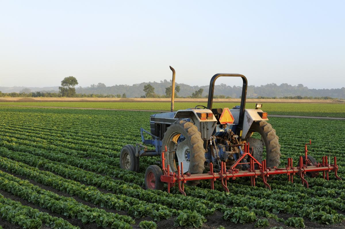 tractor-field-1-med