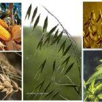 Agronomy Day multi image